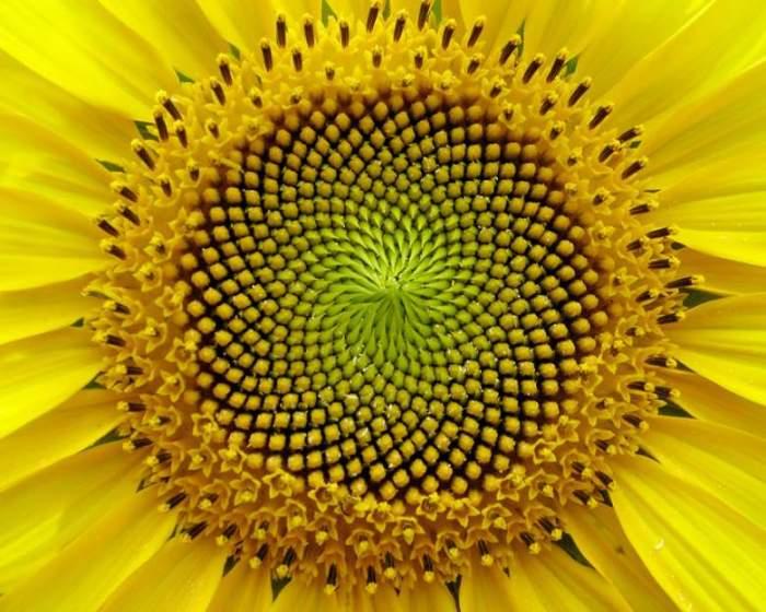 Радиальная симметрия и последовательность Фибоначчи.