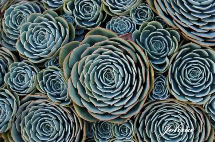 Растения, произрастающие в засушливых регионах Земли.