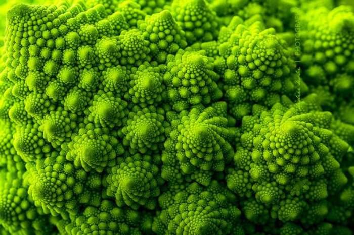 Соцветия итальянской капусты романеско похожи на пирамиды, у них красивый светло-зеленый цвет.
