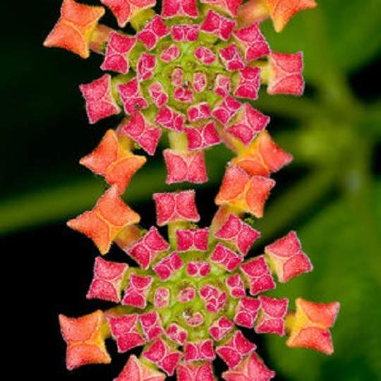 Нежное бархатное растение с мерцающими узорами.