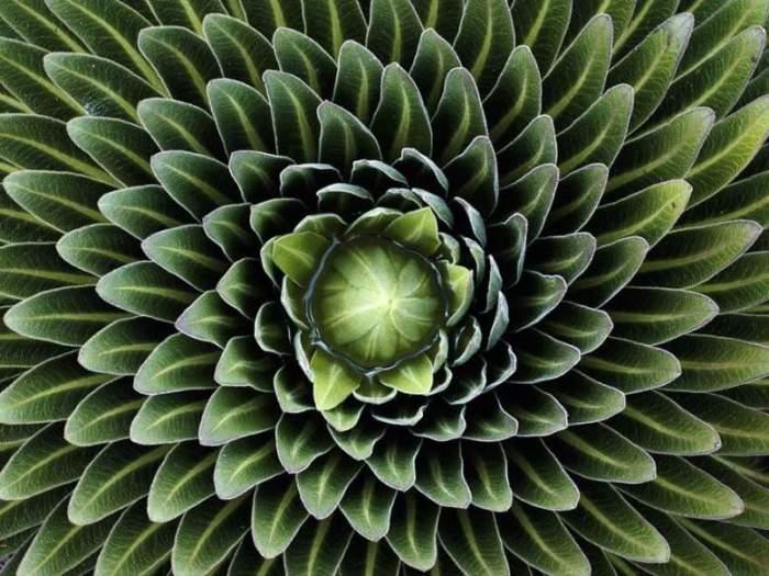 Необыкновенный цветок, способный расти без почвы – просто в воде.