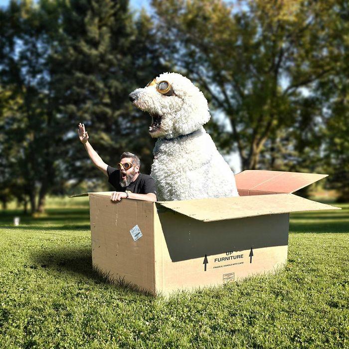 С помощью графического редактора Кристофер Клайн превратил свою собаку породы голдендудль в настоящего гиганта!