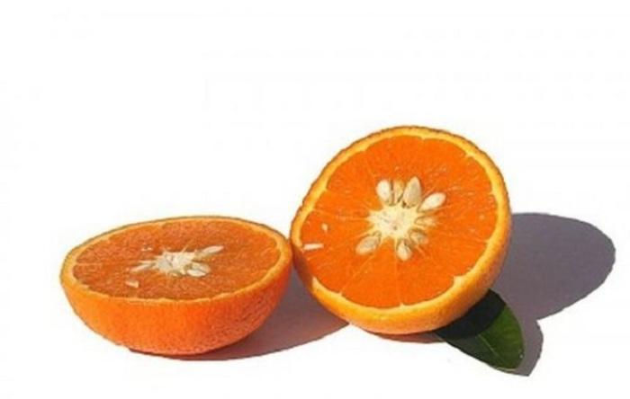 Результат скрещивания танжерина и сладкого апельсина.