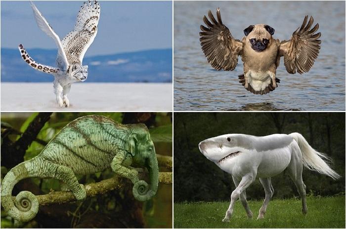 Удивительные создания-гибриды.