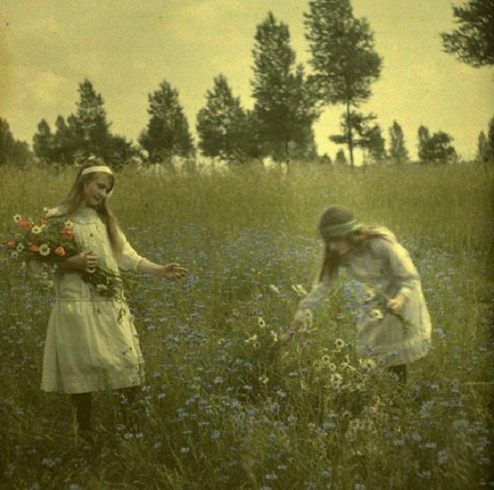 Девочки, собирающие цветы на васильковом поле в национальных платьях.