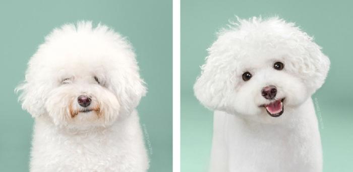 Насколько «другим человеком» выглядит собака после сеанса в парикмахерскую.