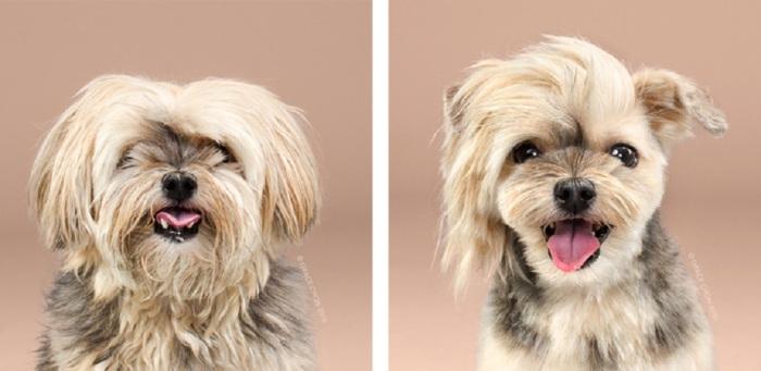 Хозяева решили подстричь пса, чтобы сделать его красивее и стильнее.