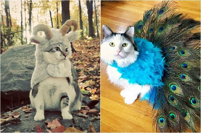 Животные в чудных костюмах.