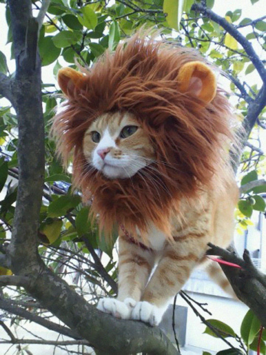 Король всех котов.