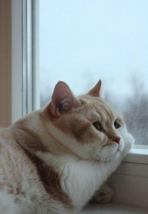Кот смотрит в окошко и любуется падающими снежинками.