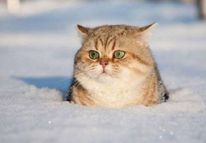 Кто тут застрял? Никто не застрял. Просто любуюсь зимней красотой.