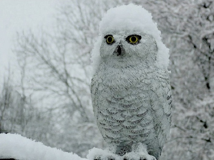 Снег сове к лицу.