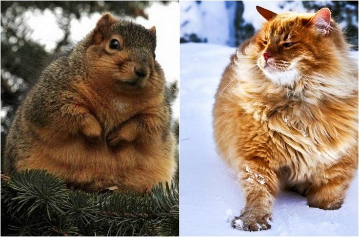 Коты, подготовившиеся к зиме.