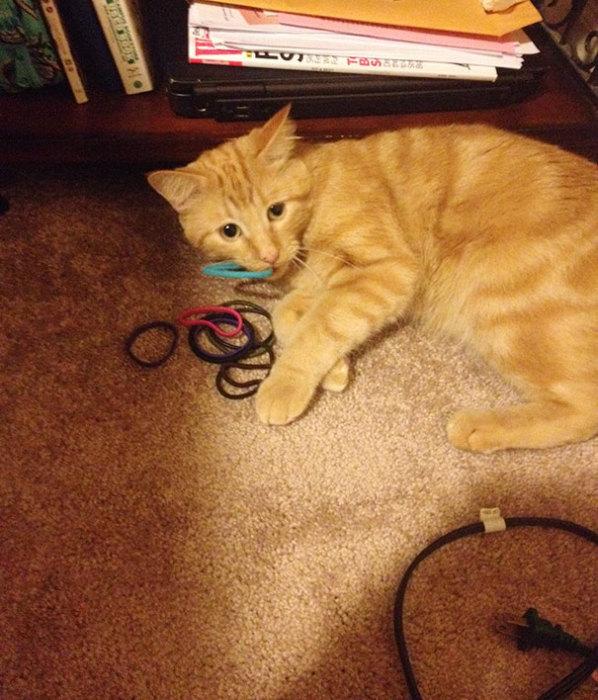 Для моей кошки подойдёт и такая резинка.