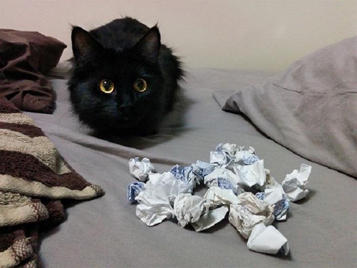 Сами съели конфеты, а получать тапком я буду?