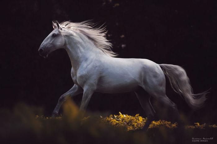 Лошадь на прогулке в осеннем лесу.
