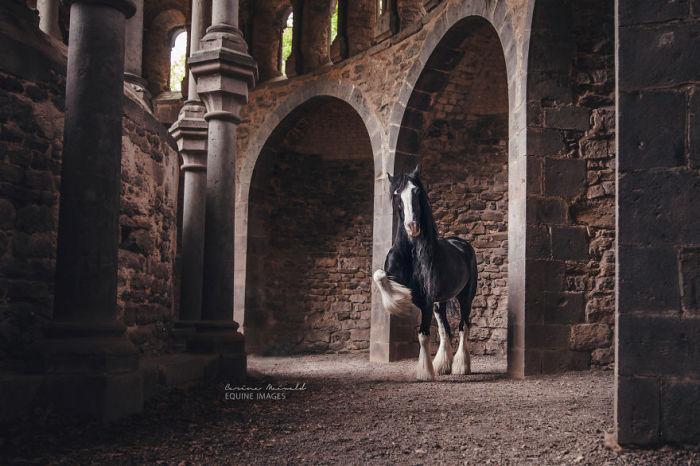 Шикарная лошадь.
