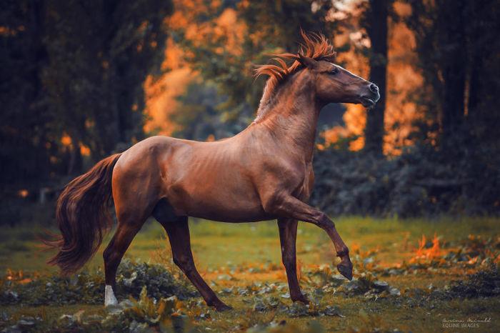 Красота и обаяние лошадей.