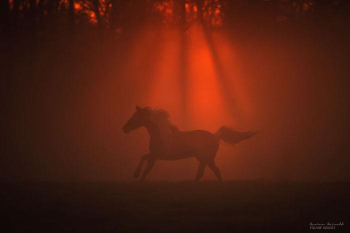 Лошадь в ярких лучах заката солнца.
