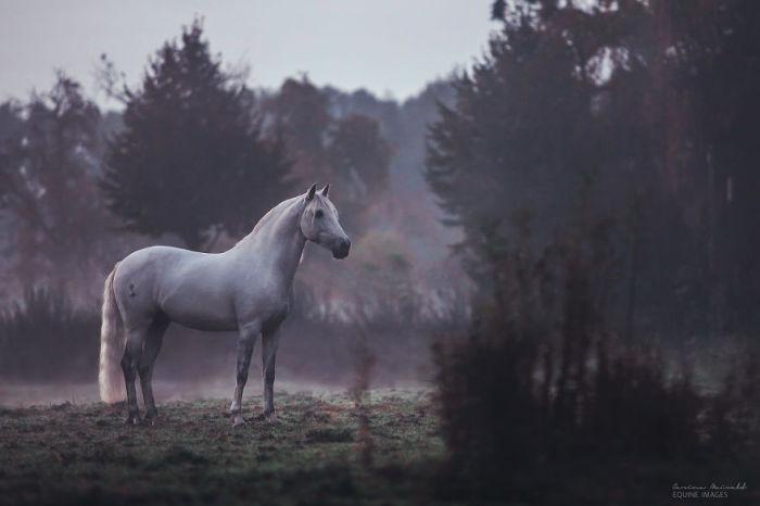Лошадь, демонстрирующая всё своё величие.