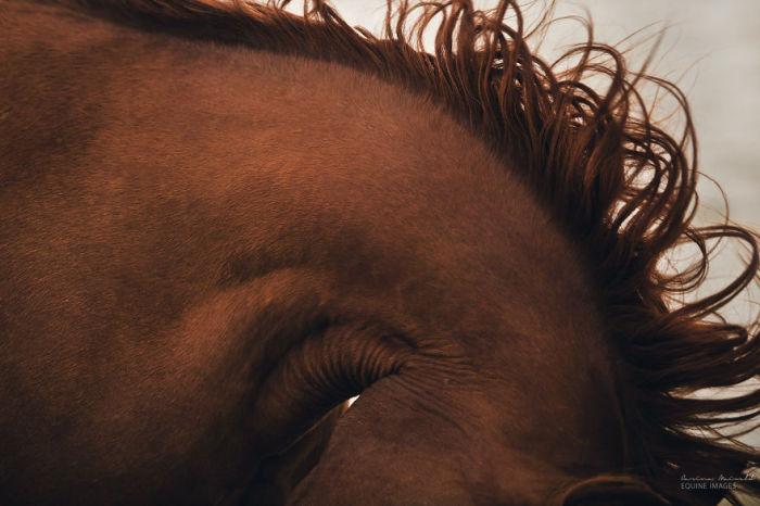 Лошадь, наклонившая голову.