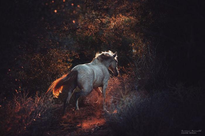 Лошадь, скачущая лесными просторами.