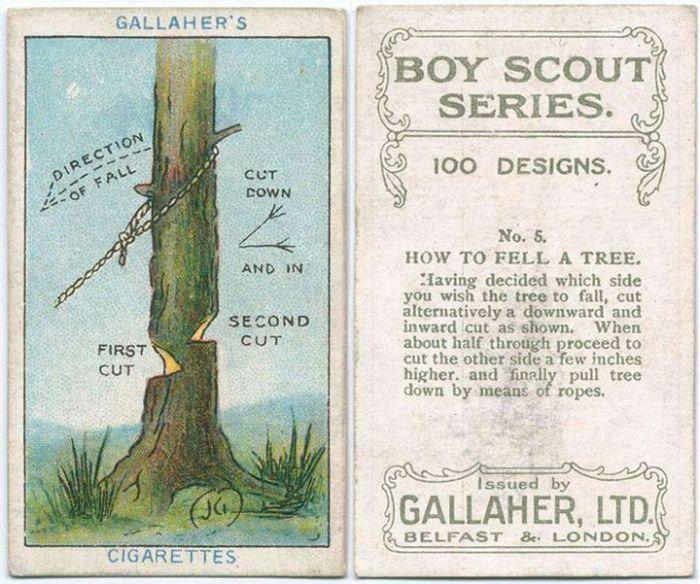 После того как решено, в какую сторону должно упасть дерево, нужно подрубить его с двух сторон: с одной выше, с другой ниже.