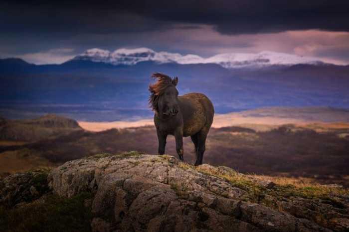 Лошадь мирно пасется на пастбище.