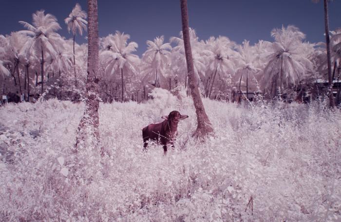 С помощью смены спектра фотограф сумел превратить «обычное» в «невероятное!»