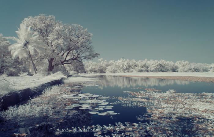 С инфракрасным фильтром пейзажи Гоа похожи на владения Снежной королевы.