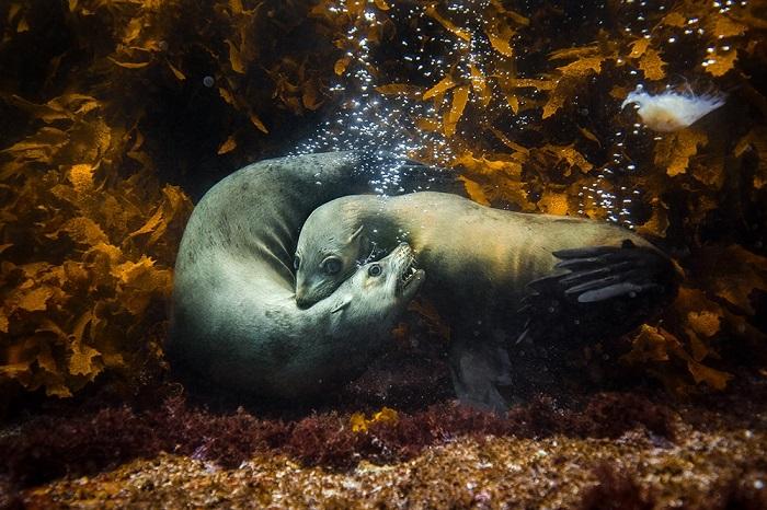 Победителем в категории «Природа» среди профессионалов стал австралийский фотограф Филип Терстон (Philip Thurston).