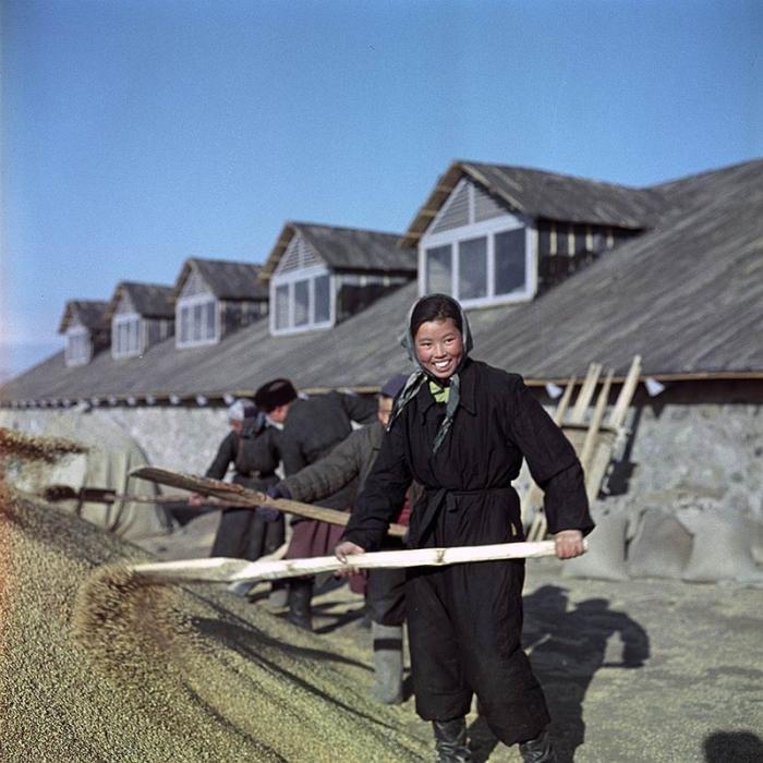 Группа людей собирает зерно, чтобы оно не рассыпалось.