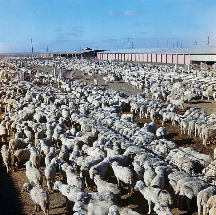 Животноводство - вторая целина Казахстана.