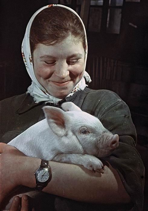 Лучшая свинарка Мария Рогачева со своим питомцем на руках.