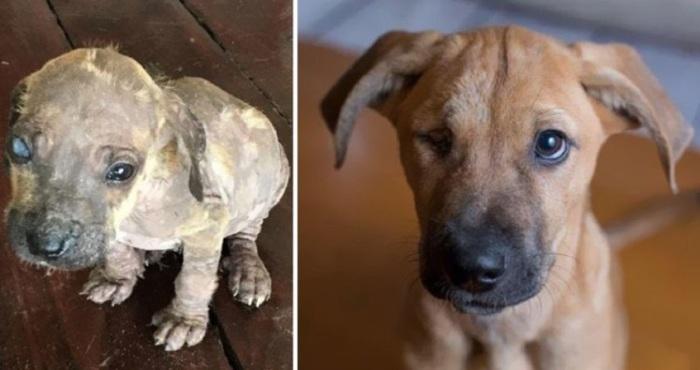 Больной щенок, найденный в джунглях Мексики, теперь вполне здоров и проживает в Канаде.