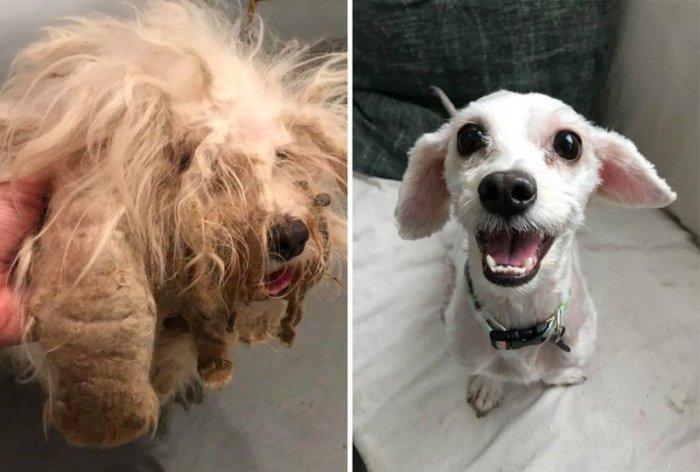 Бродячая собака, попавшая в приют в ужасном состоянии, обрела новую семью.