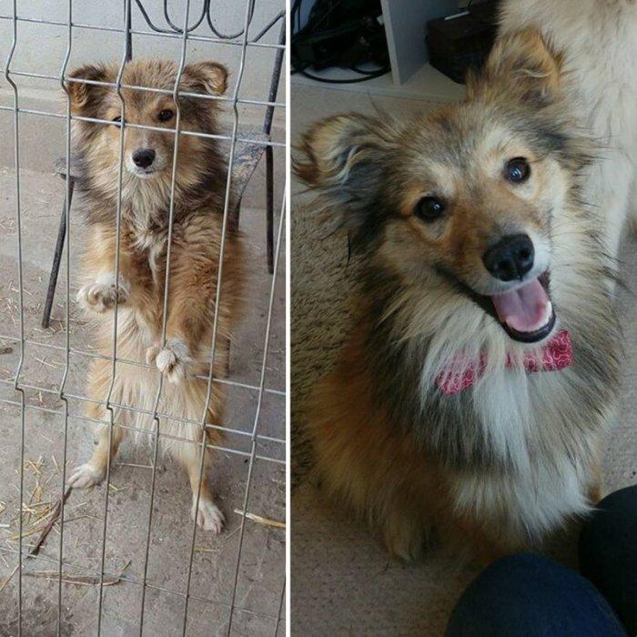 Пушистый щенок преодолел долгий путь из Румынии и обрел новый дом в Великобритании.