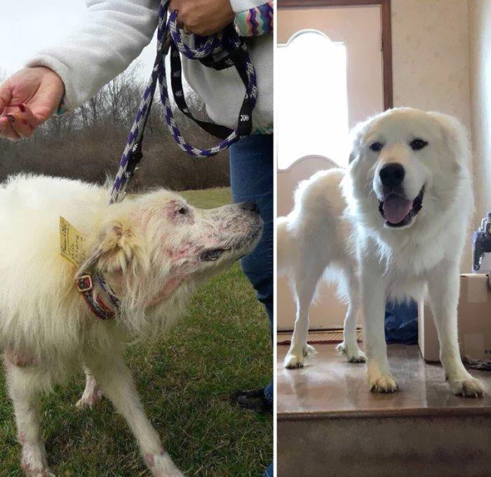 Невероятное превращение обтянутого кожей скелета в пушистого и красивого пса.