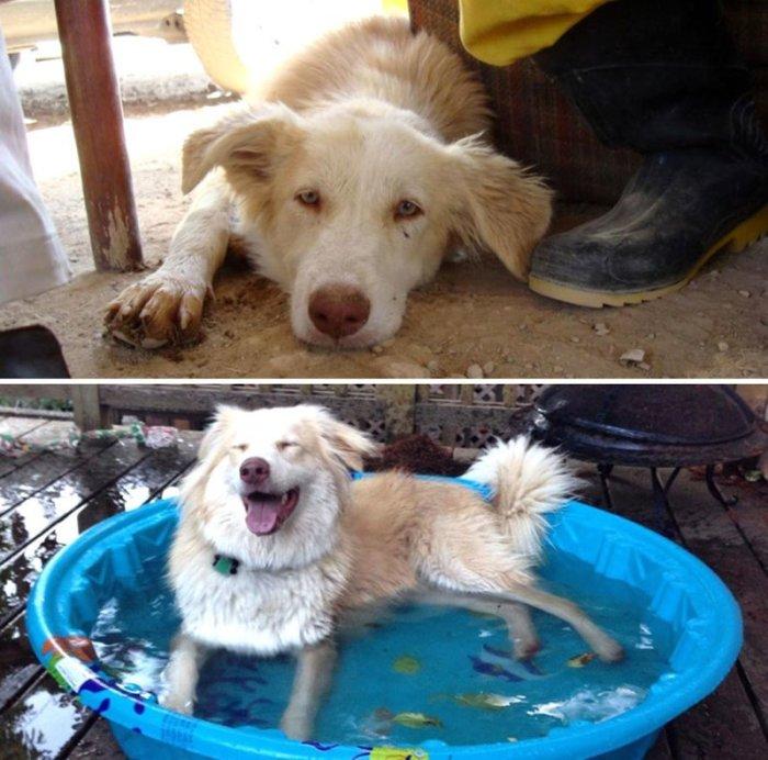 Собака, жившая на улицах Ирана, скорее всего, ничуть не жалеет о переезде в США.