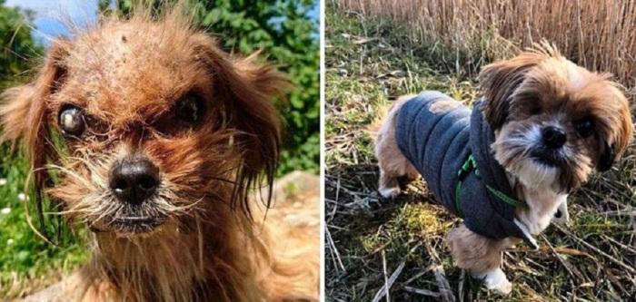 Работники приюта приложили немало усилий для спасения пса по кличке Фродо.