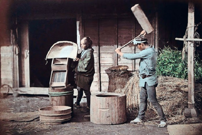 Обработка риса с помощью специальных приспособлений.