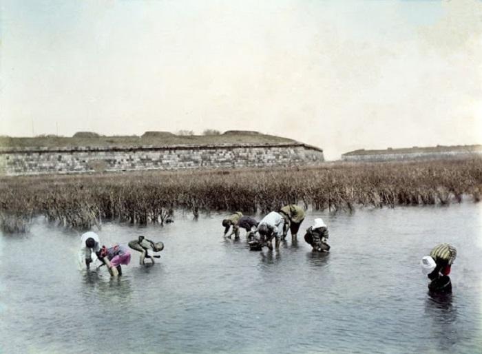 Фермеры, по колено в воде, обрабатывают плантации риса.