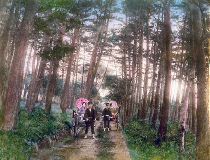 Состоятельные дамы из высшего общества путешествуют в одноместных повозках, которые тянут рикши.