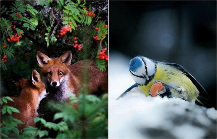 Дикие животные финского леса.
