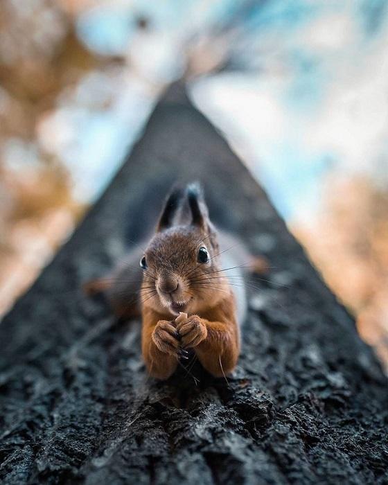Фотограф из Финляндии Йоахим Мюнтер специализируется на съемке животных.
