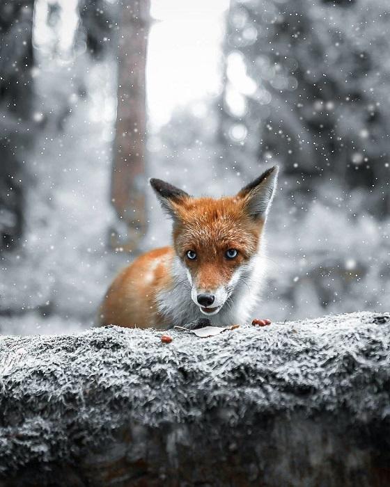Большую часть своих снимков фотограф делает в обширных финских лесах.