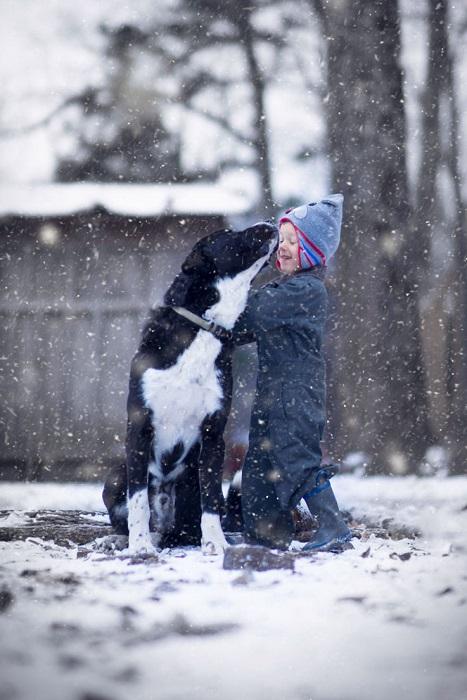 Лохматый сторожевой пес охраняет ферму и курятник от лис.