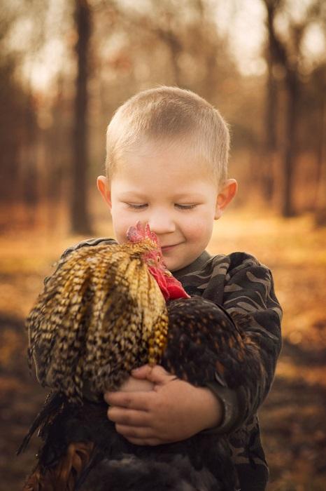 Задира с красным гребешком чувствует себя великолепно в детских объятиях.