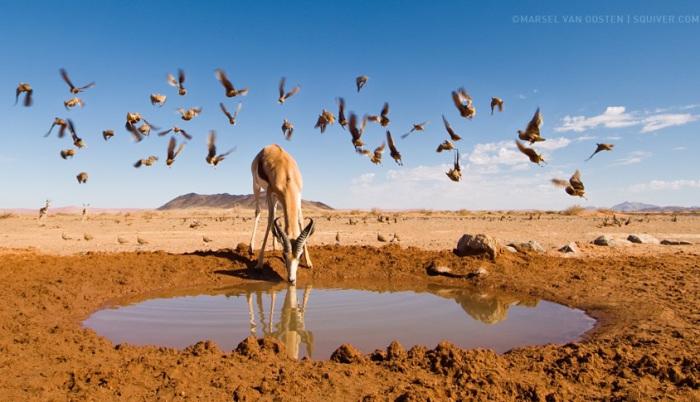 Вода является важным фактором среды обитания. Автор фотографии: Марсель ван Остен (Marsel van Oosten).