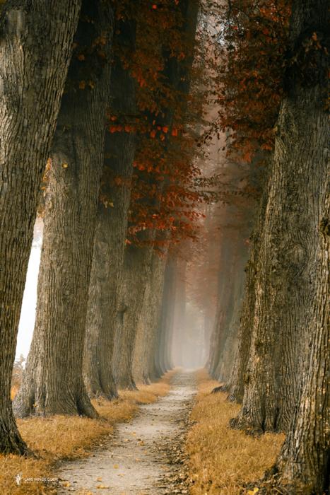 Тропинка среди могучих стволов деревьев. Автор фотографии: (Lars van de Goor).